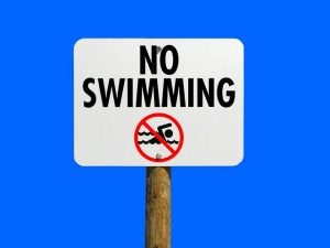 do ferrets swim